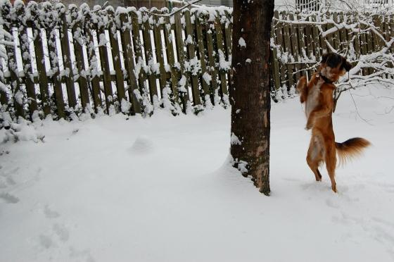 Leo likes snow