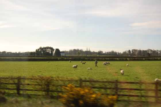 Irish countryside 1